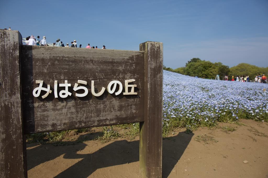 r_miharashi